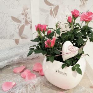 Bild einer rosafarbenen, dekorierten Rosenpflanze in Tiziano-Übertopf, erhältlich in der Blüten-